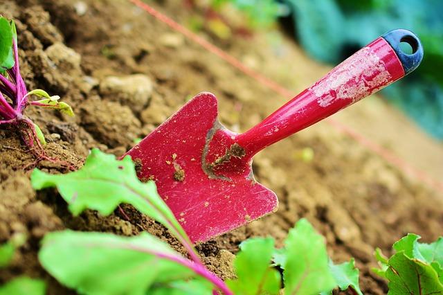 Červená lopatka v pôde.jpg