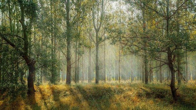 lesný porast.jpg